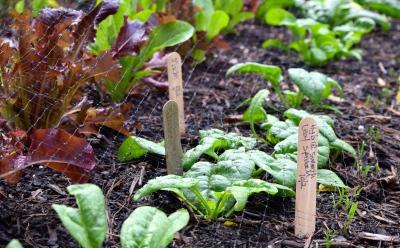 greens new gardens plants