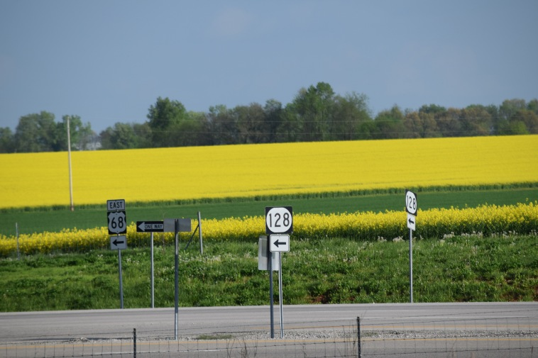 How local canola crops are grownjudyschickens we pulled off the road and googled what are the yellow flowers growing in the fields wikipedia knew exactly what we were talking about mightylinksfo