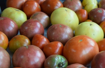 TNFP tomatoes