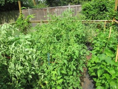 vegetable gardens vegetable gardening