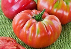 tomato-heirloomgermanqueen-m
