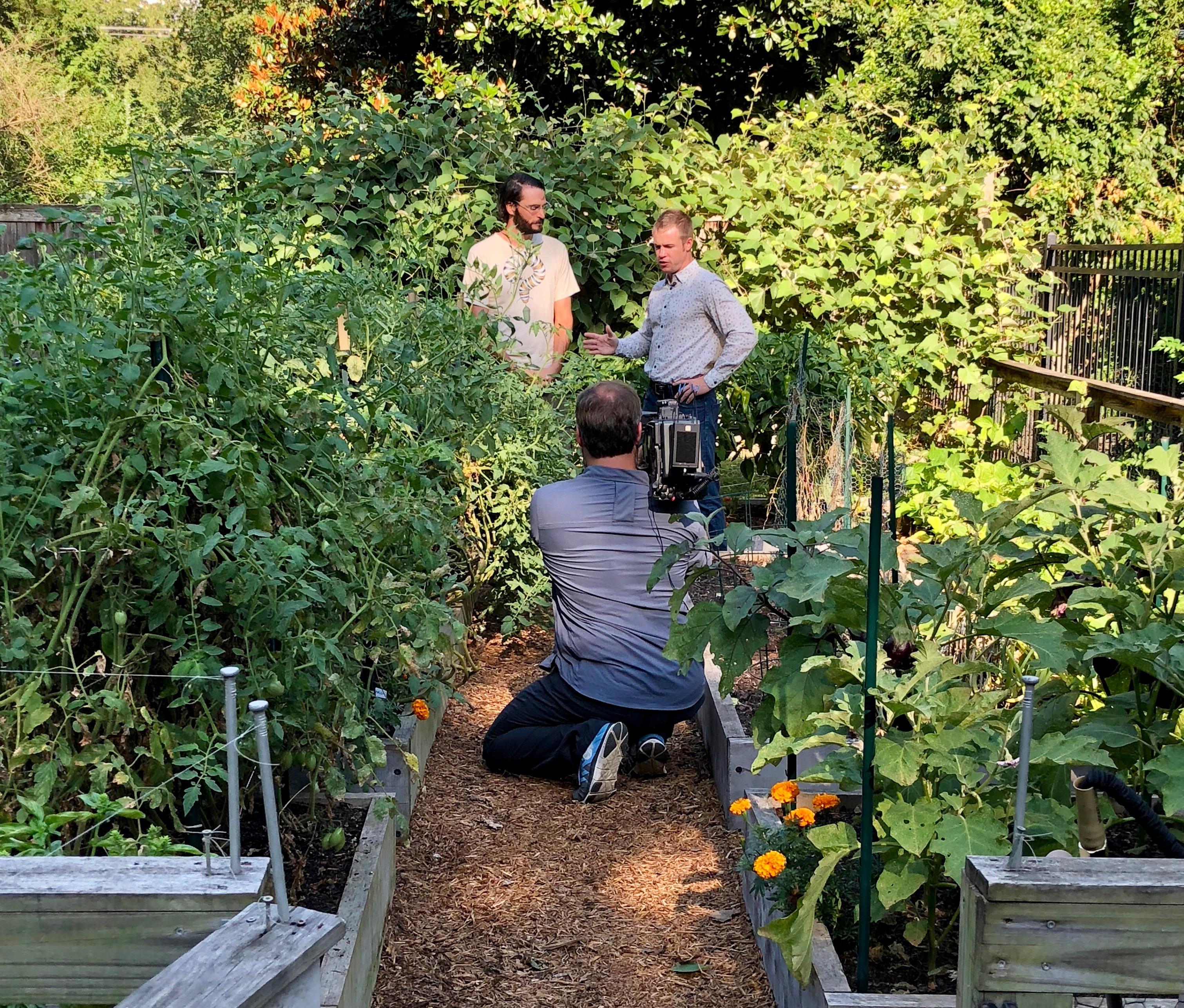 The Volunteer Gardener@judyschickens
